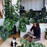 اسید هیومیک برای گیاهان آپارتمانی