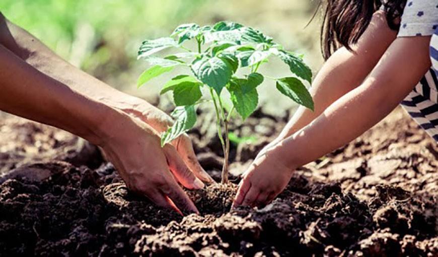 آموزش گام به گام باغداری ارگانیک