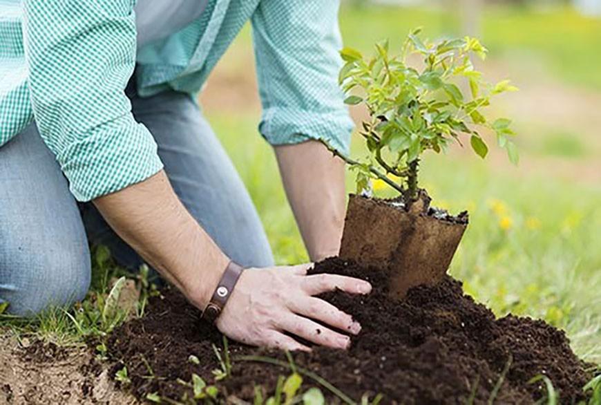 آموزش باغداری ارگانیک
