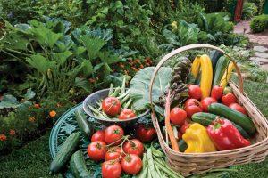 مشاوره باغداری ارگانیک