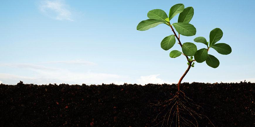 اصول کشاورزی مدرن و کودهای ارگانیک