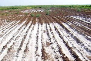 شوری خاک و اسید هیومیک
