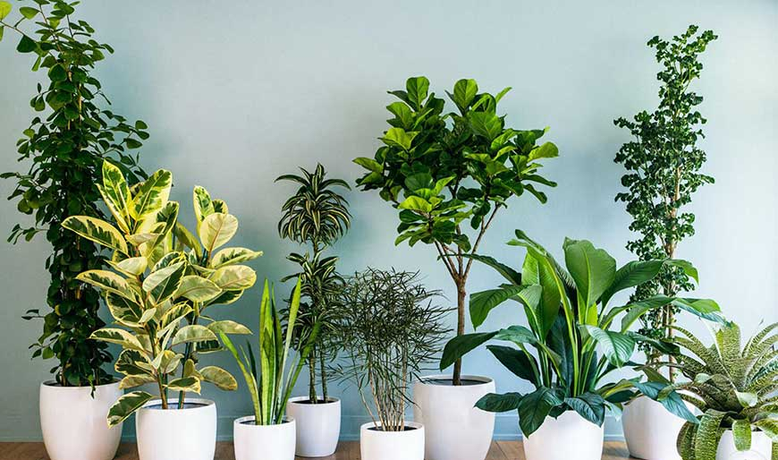 کود مخصوص برای گیاهان آپارتمانی