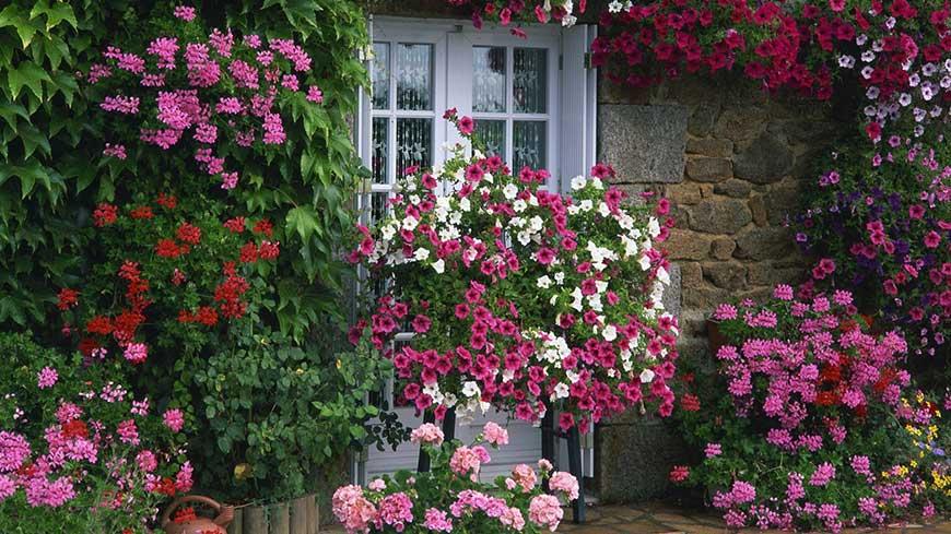 کود مخصوص گلهای آپارتمانی