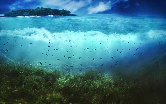 عصاره جلبک دریایی