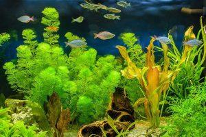 گیاهان آکواریومی