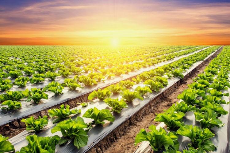 کود افزایش باردهی محصول
