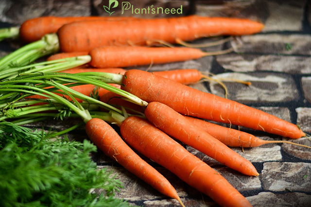 بهترین کود برای هویج